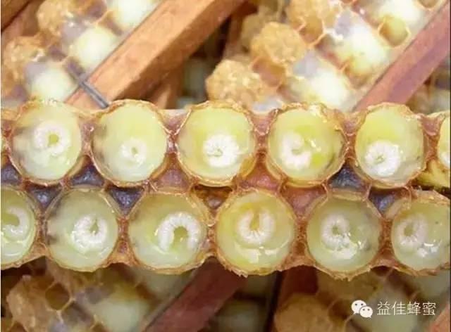 枣蜂蜜 蜂蜜可以治疗鼻炎吗 新闻 维生素 蜜蜂管理