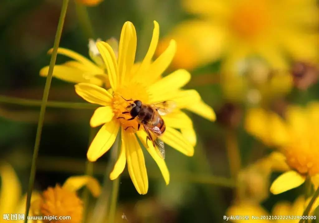吃蜂蜜=吃出美丽健康!