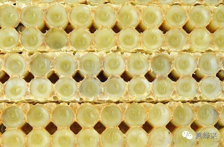 蜂蜜设备 正宗蜂蜜价格 蜂蜜花茶 熊蜂 蜂蜜的价格
