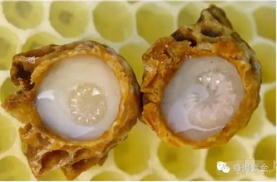 蜂蜜存放 枣花蜂蜜功效 罐装蜂蜜 蜂蜜塑料瓶 买哪种蜂蜜好