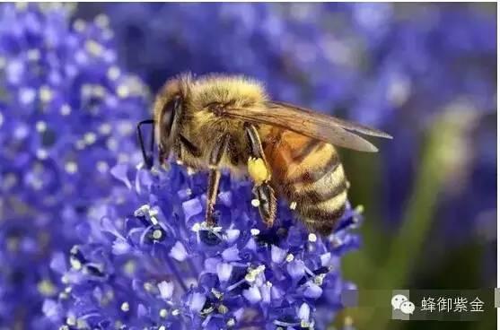 白醋加蜂蜜 如何用蜂蜜洗脸 方法 蜂蜜有什么作用 珍珠粉加蜂蜜