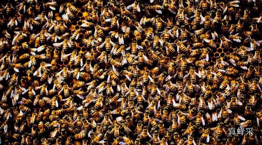 探秘蜜蜂王国