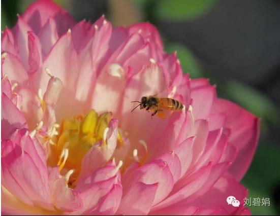 蜂蜜鉴定 早上喝蜂蜜水好吗 假蜂蜜 浙农大1号意蜂 蜂蜜怎样去斑