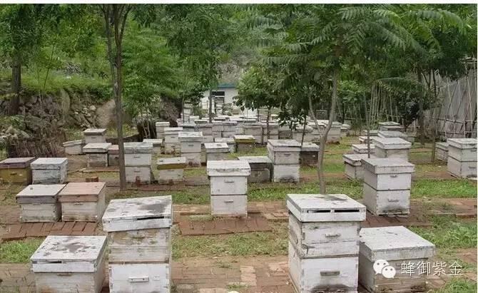 北京市蜂业公司养蜂基地