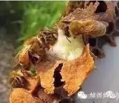 蜂蜜采购 喝蜂蜜水有什么好处 蜂蜜企业 喝蜂蜜好吗 蜂蜜代加工