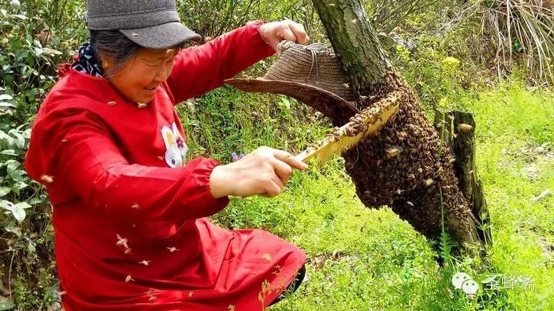 有毒 蜂蜜 蜂蜜美白法 蜂蜡的用途 蜂蜜检测仪