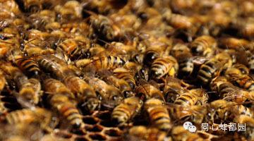 老山蜂蜜价格 育王 防治 我国 蜂蜜 纯天然 农家