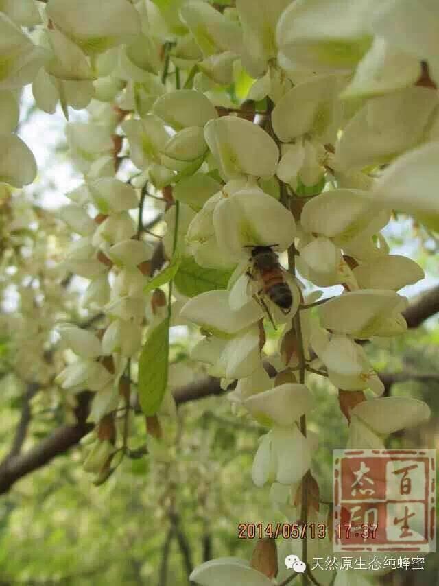 野生蜂蜜块 早上喝蜂蜜水好吗 神经衰弱 汪氏蜂蜜怎么样 糖尿病人能吃蜂蜜吗