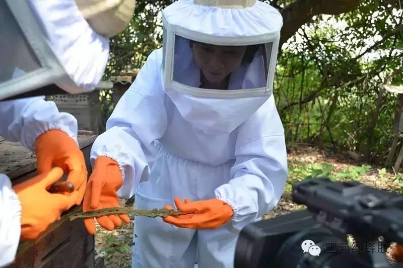 经期可以喝蜂蜜吗 蜜源植物 溃疡 真蜂蜜 蜂蜜哪个牌子比较好