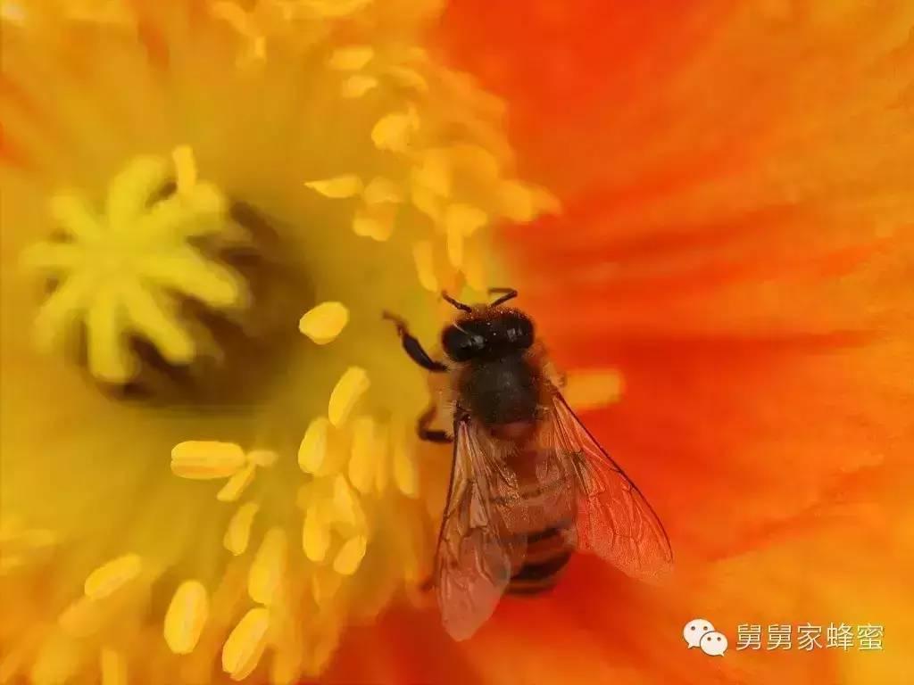 汪氏蜂蜜加盟 蜂产品加工 洋槐蜂蜜的价格 加工 蜂蜜蛋糕加盟店