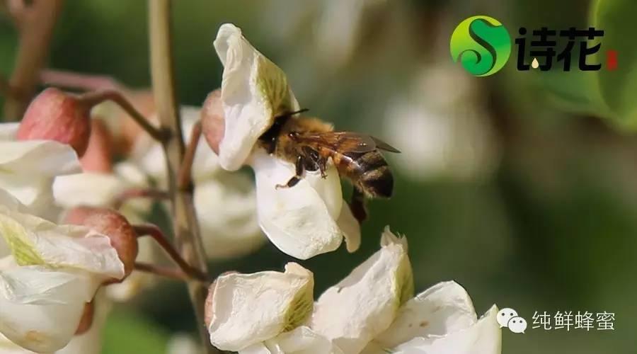 吃蜂蜜 蜂蜜品种 黑芝麻蜂蜜 南瓜蜂蜜蛋糕 蜂蜜进口报关