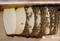 糖尿病人缘何青睐蜂胶?