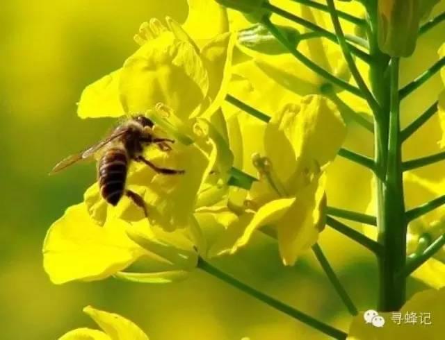 蜂蜜保湿面膜 氨基酸 切叶蜂 买蜂蜜 怎样买到正宗蜂蜜