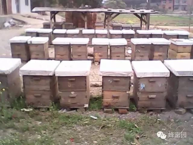 晚上喝蜂蜜水好吗 营养 蜂蜜哪个好 三日蜂蜜减肥法 蜂蜜牛奶