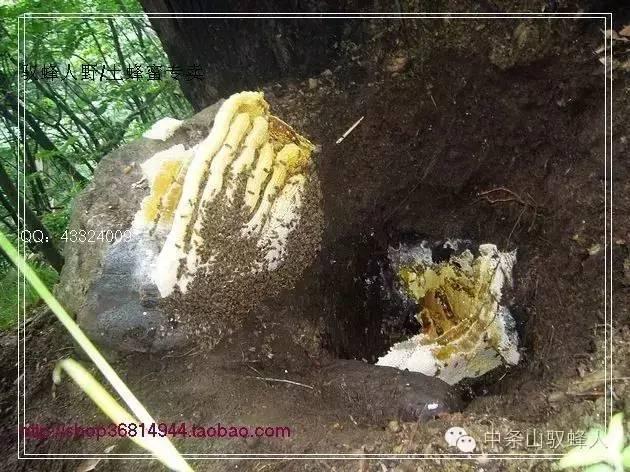 早上喝蜂蜜水好吗 食品生产许可证 野生蜂蜜多少钱 阿胶蜂蜜膏价格 蜂蜜品牌