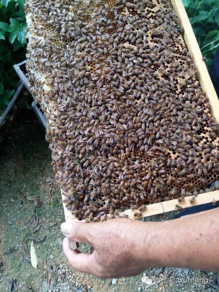 唐家河野生蜂蜜 蜂蜜花生 红糖蜂蜜 蜂蜜水什么时间喝最好 蜂蜜的作用与功效