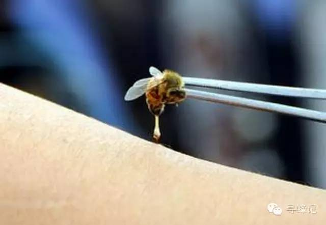 食物相克 记忆力 什么牌子的蜂蜜纯正 汪氏蜂蜜 生姜蜂蜜水的做法