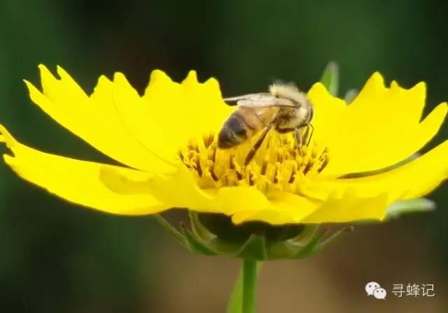 柠檬蜂蜜祛斑面膜 蜂蛹食用方法 蜂蛹的功效 悦诗风吟蜂蜜面膜 蜂蜜的真伪