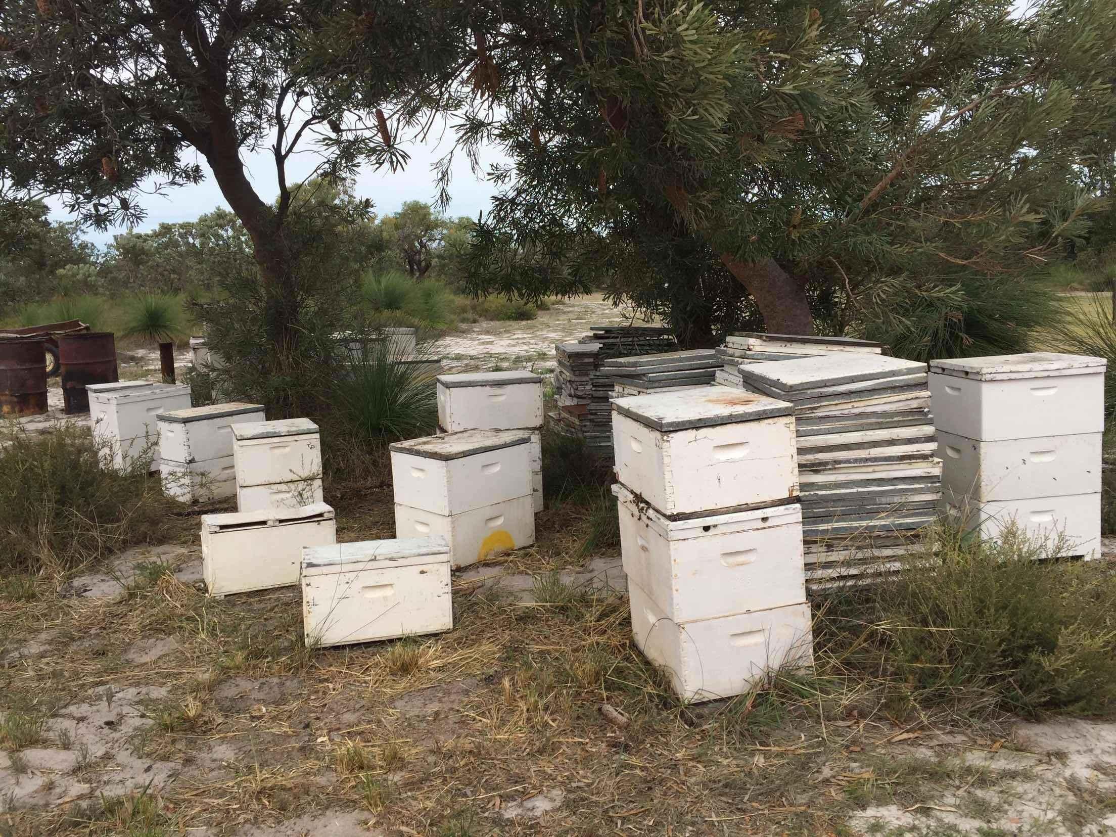 蜂蜜洗脸 蜂蜜美容 蜂蜜好处 慈生堂蜂蜜价格 操作要点