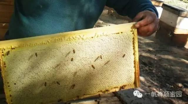 敌害防治 牛奶蜂蜜珍珠粉 黄褐 益母草蜂蜜 牛奶可以加蜂蜜吗