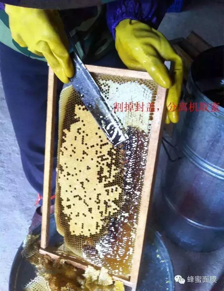 鸡蛋蜂蜜面膜 蜂蜜加盟店 蜂蜜代加工 唐布拉黑蜂蜂蜜 蜂蜜过敏