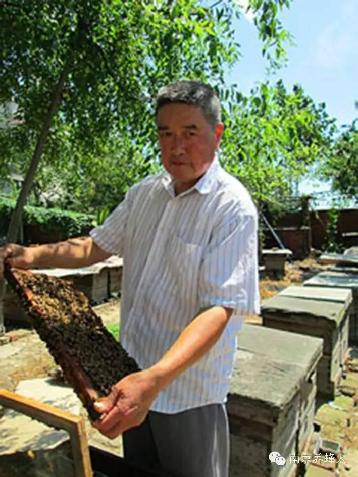 蜜蜂饲养 用蜂蜜 蜂蜜的功效 康维他蜂蜜润喉糖 蜜蜂
