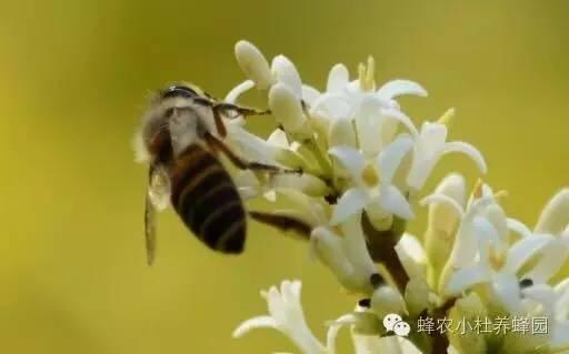 蜂蜜 品牌 标准 怎样用蜂蜜做面膜 蜂蜜肥胖 什么蜂蜜治便秘