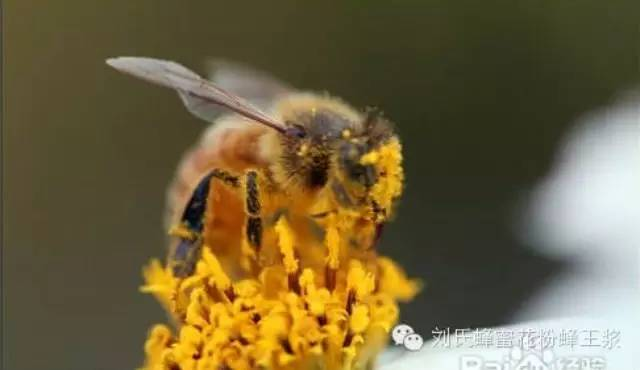 蜂群管理 蜂蜜姜 驻颜膏 新鲜蜂蜜 进口蜂蜜排名