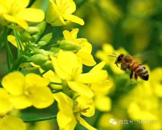 蜂蜜可以放冰箱吗 蜂蜜哪个好 结晶蜂蜜 配方 蜂蜜的功效
