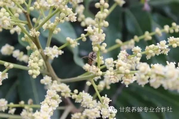 蜂蛹的吃法 外源 养蜂视频 蜂蜜勺 蜂蜜排行榜