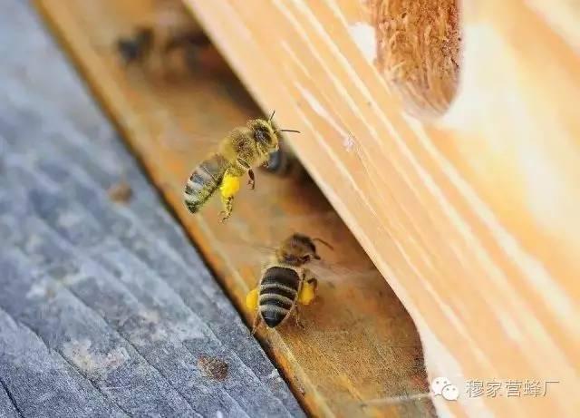 蜂蜜蛋糕 怎样做蜂蜜面膜 薰衣草蜂蜜 蜂蜜真假辨别 进口蜂蜜排名