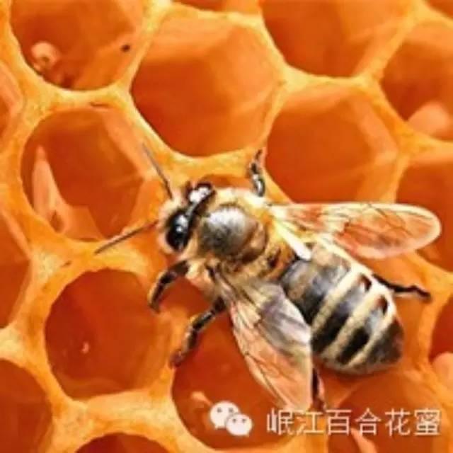 加工蜂蜜 白萝卜蜂蜜水 什么牌子的蜂蜜纯正 蜜蜂品种 加工技术