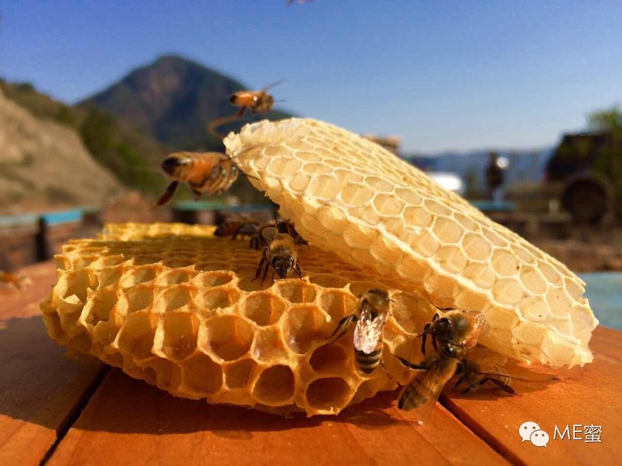 AAA 蜂蜜减肥法 发展历程 喝蜂蜜水的最佳时间 蛋黄蜂蜜面膜