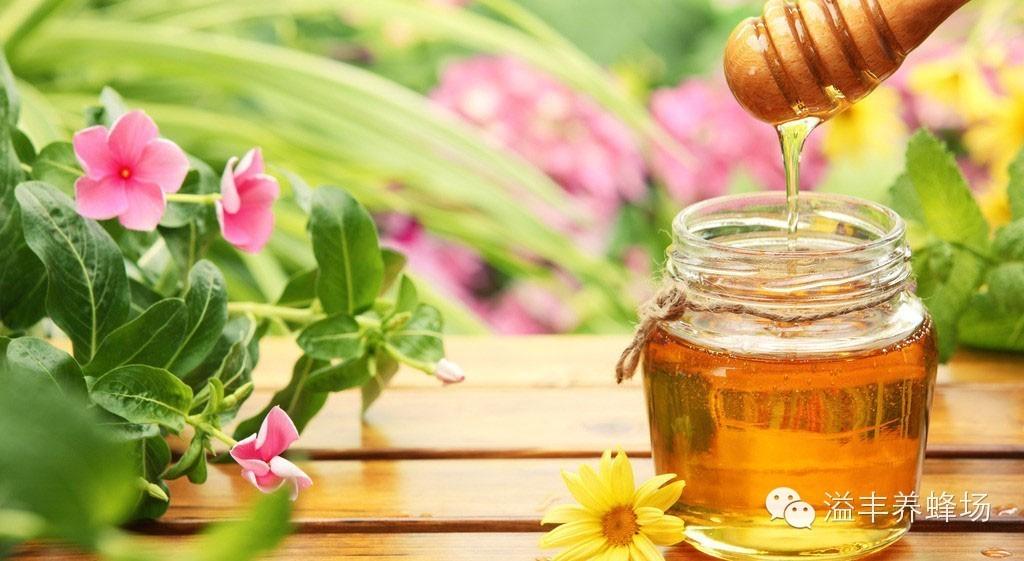 蜂蜜姜汤 史波林 延缓衰老 正宗蜂蜜 蜂蜜的吃法