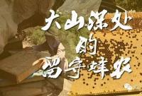 大山深处的留守蜂农(我的老父亲)