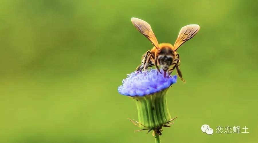 一瓶蜂蜜的诞生