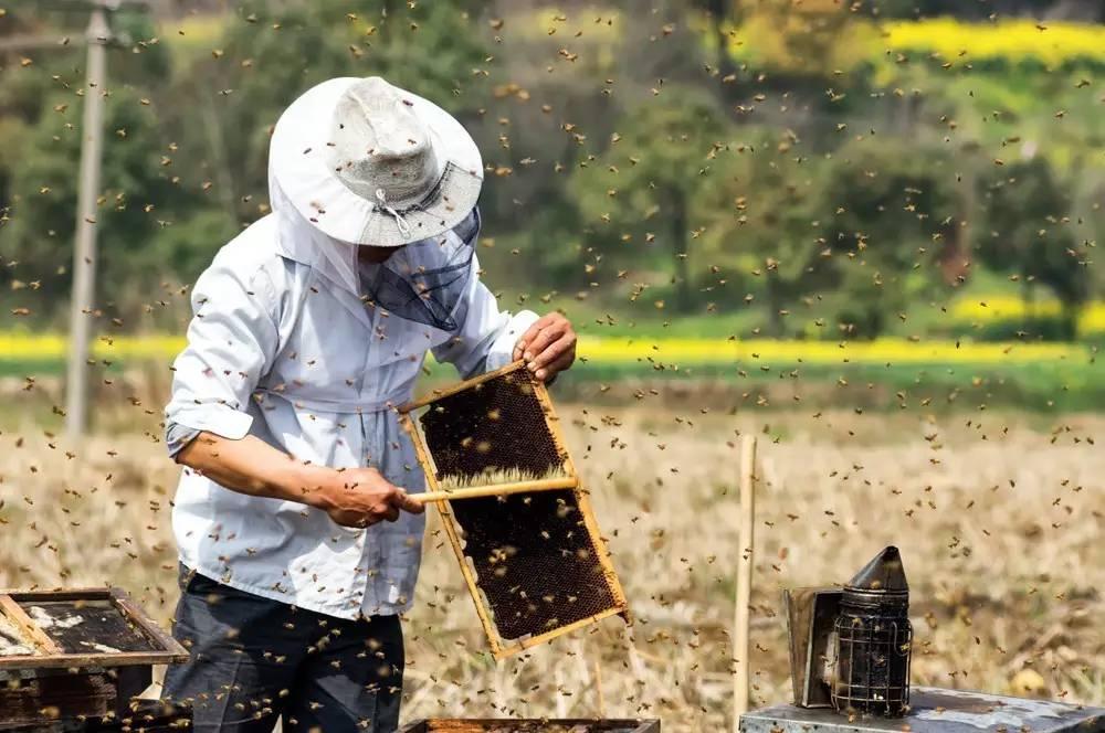 蜂农不想养蜂了,只有4个理由!