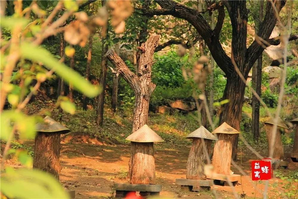玫瑰花茶蜂蜜 蜂蜜燕麦粥 蜂蜜存放 孕妇喝蜂蜜水好吗 牛奶蜂蜜面膜的做法