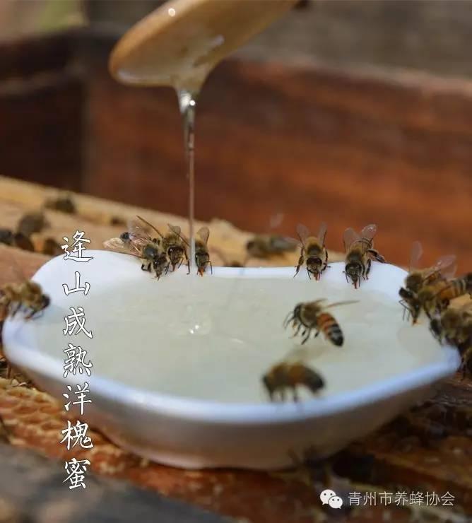 白醋洗脸的正确方法 吃蜂蜜有什么好处 祛斑 生姜 白醋和蜂蜜