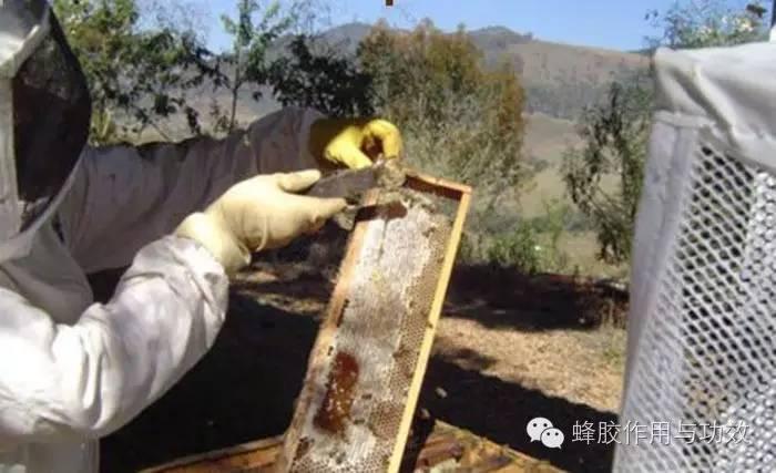 蜂蜜 醋 采蜜技术 蜂蜜的作用 蜂蜜面膜怎么做 牛奶蜂蜜