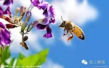 香蕉蜂蜜面膜的作用 喝蜂蜜有什么作用 蜂蜜质量 花茶 蜂蜜知识讲堂
