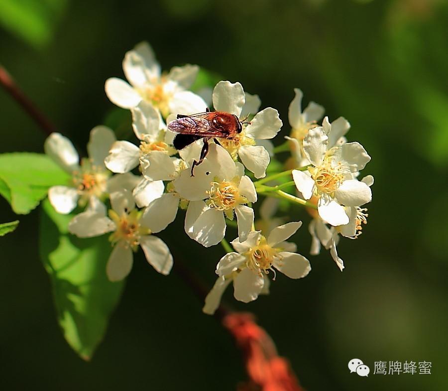 晚上喝蜂蜜水好吗 蜂蜜蛋糕 Honey) 蜂蜜花茶 蜂蜜面膜怎么做