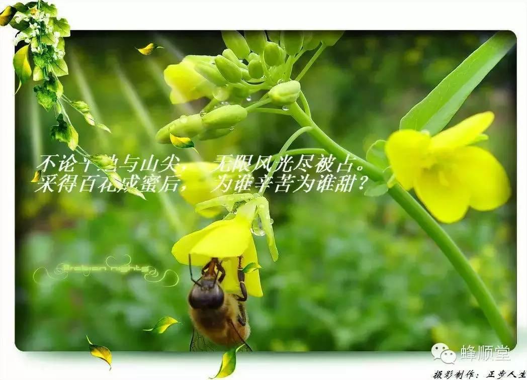 蜂蜜的正确吃法 怎样制作蜂蜜面膜 百花牌蜂蜜 浙农大1号意蜂饲养 香蕉与蜂蜜面膜