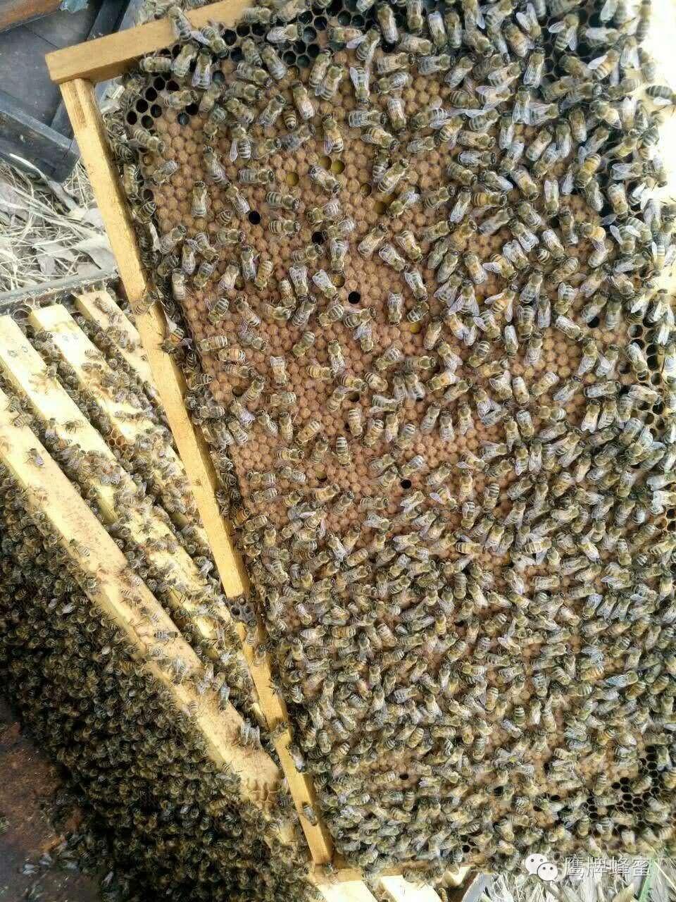 时间 中国 正宗蜂蜜柚子茶 片剂 什么品牌蜂蜜最好