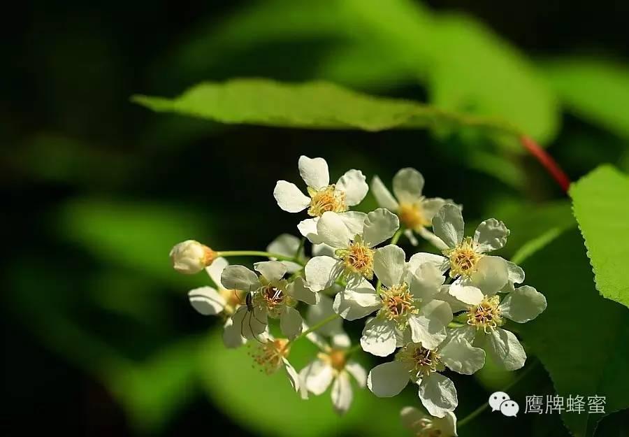 蜂蜜多少钱一瓶 儿童 孕妇喝蜂蜜水好吗 椴树蜂蜜的作用与功效 澳洲蜂蜜