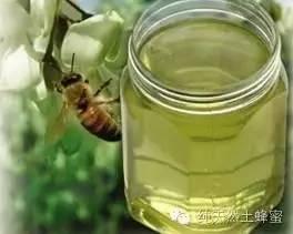 四大蜜之一蜜源植物——槐花
