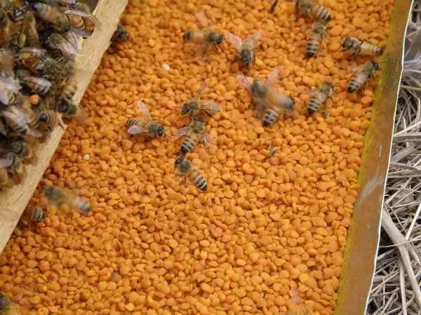 外源 常喝蜂蜜 土蜂蜜好吗 蜂蜜美白作用 病虫害