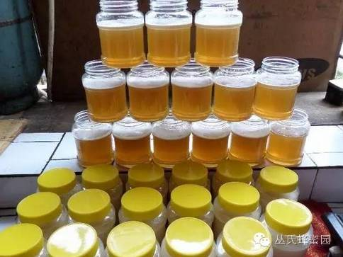 红枣 麦卢卡蜂蜜(Manuka 茶叶蜂蜜 蜂蜜 检测
