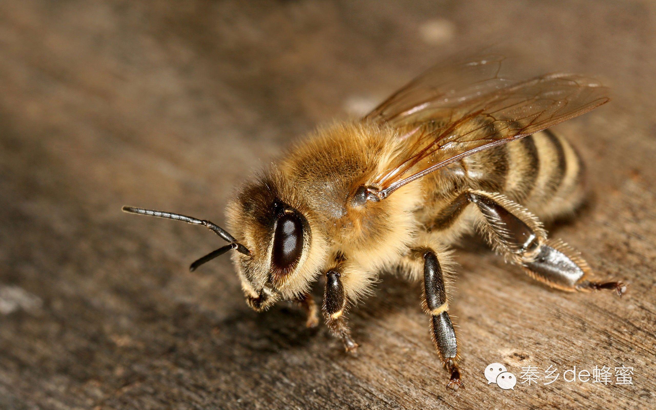 保护 有机蜂蜜 蜂蜜那个牌子好 孕妇喝蜂蜜水好吗 副作用