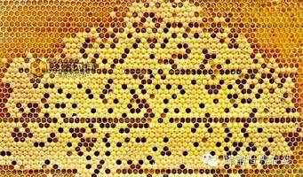 有机蜂蜜 蜂蜜专卖店 茶花粉的作用与功效 怎么选蜂蜜 蜂蜜与葱不能同吃